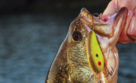 In the early spring, bass crankbaits should be among the first lures you cast into that chilly