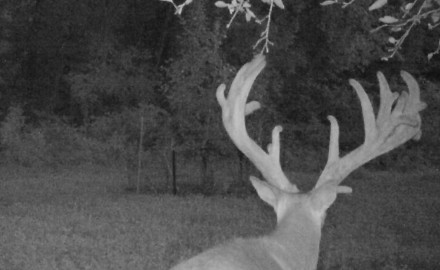 A Maryland man was convicted this week for poaching a potential state-record whitetail deer on a