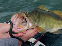 alabama bass fishing