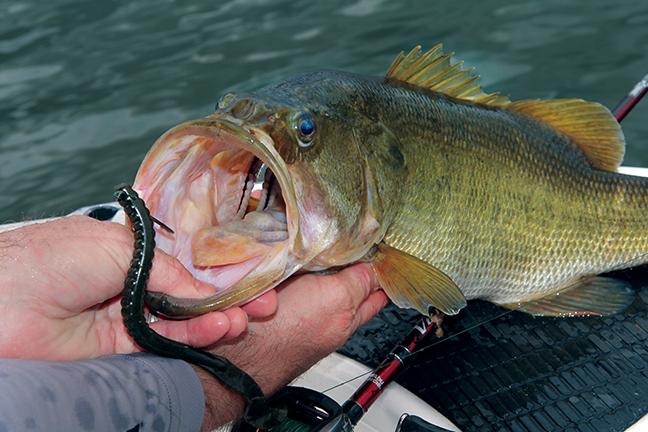 2017 Top Alabama Bass Fishing Spots