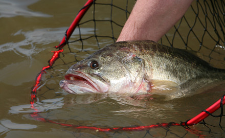 2017 Midwest Bass Fishing Feature