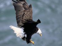 Photo courtesy U.S. Fish & Wildlife Service