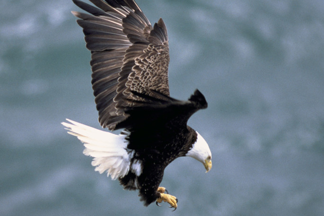 Shooting Deaths of 2 Bald Eagles May Be Related