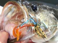 fly. bass fishing