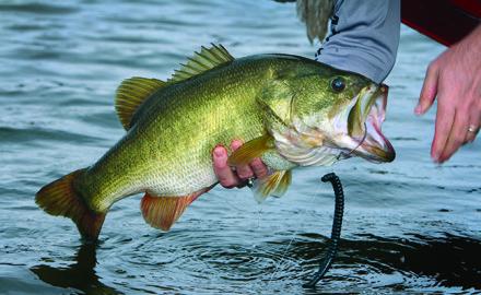 New York Bass Fishing