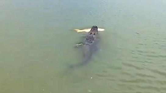 Extreme fishing videos