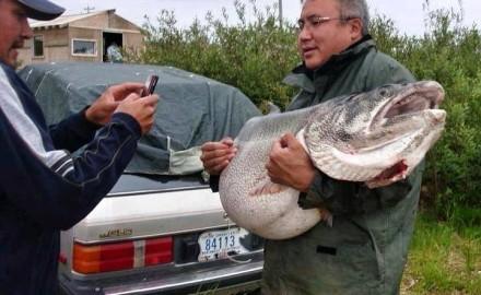 trophy lake trout