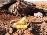 turkey shotguns