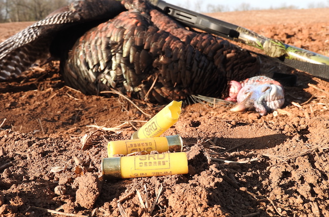 turkey shotguns