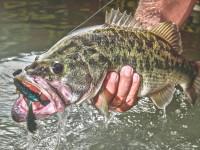 bass fishing-wind