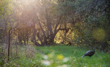 turkey hunting safety