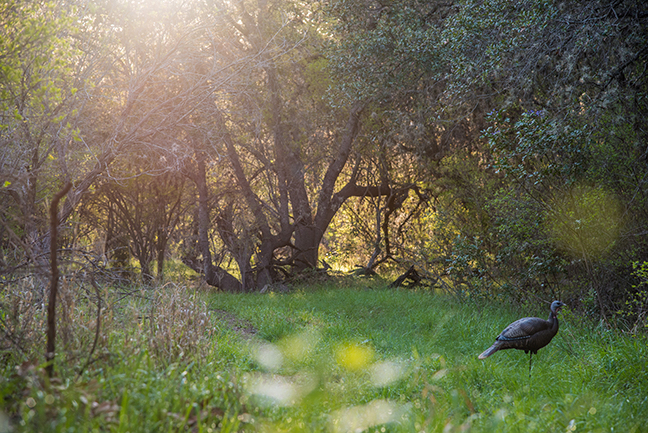 Turkey Hunting Safety Urged After Recent Shooting Accidents