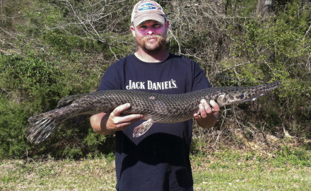 record spotted gar