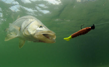 Regulations for snook fishing in Gulf of Mexico waters in and around Florida, including in