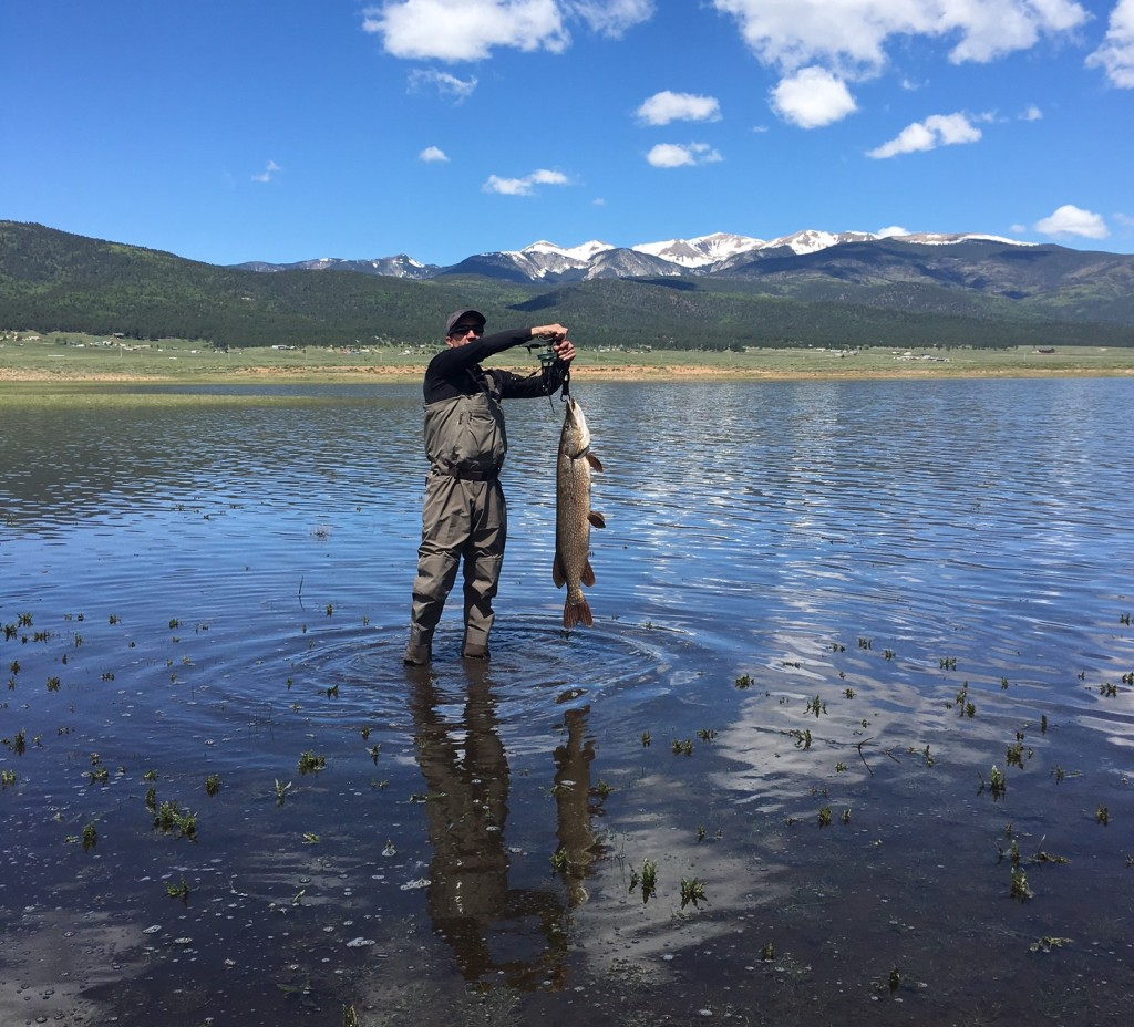 Eagle Nest Nm Spawning Northern Pike Game Fish