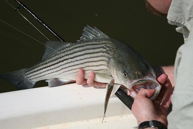 North Carolina Family Fishing