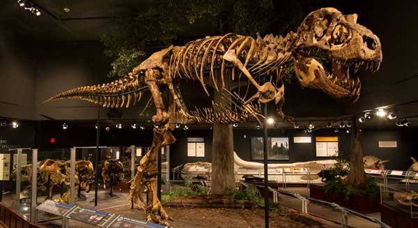 Dinosaur fans won't want to miss The Museum of The Rockies in Bozeman, which houses the largest collection of T.rex specimens the world. Photo Courtesy Museum of The Rockies
