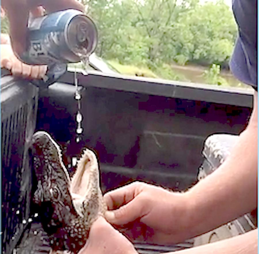 'Gator Shotgun' Jokesters Accused of Giving Alligator Beer