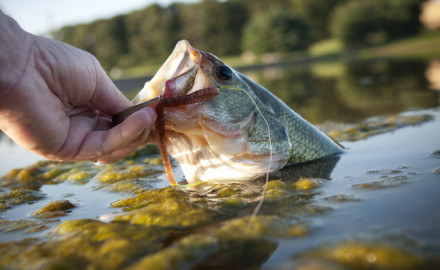 When a lunker strikes and misses, have a second-chance bass offering ready to go, rather than