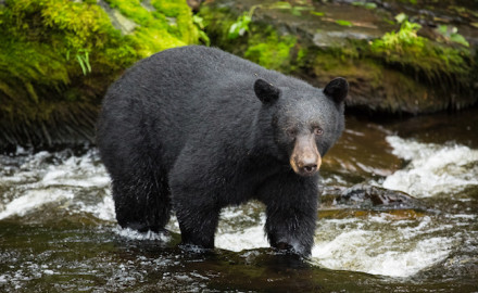 An Idaho hunter is recovering from serious injuries he sustained in a black bear attack.