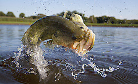 Return to prespawn flats and throw topwater lures or floating worms for postspawn and summer bass