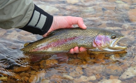 It's not too late to get into some prime fishing. Here are our picks for June trout fishing in