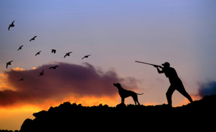 Real-world experience can be the best training tool with hunting dogs.