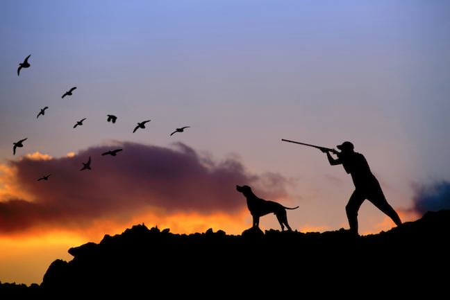 Off-Season Training for Hunting Dogs