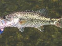 best bass fishing