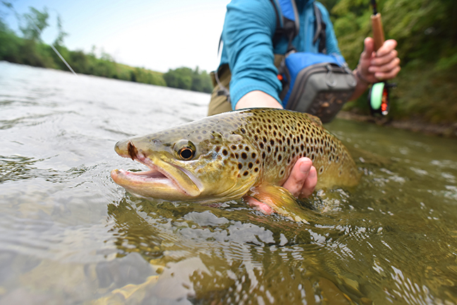 June Trout: Catching Them With New Tactics