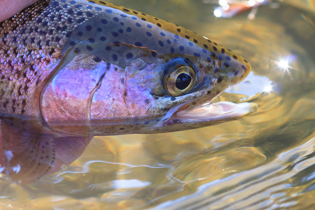 A Trout Stream for a Lifetime