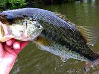 lake oconee bass