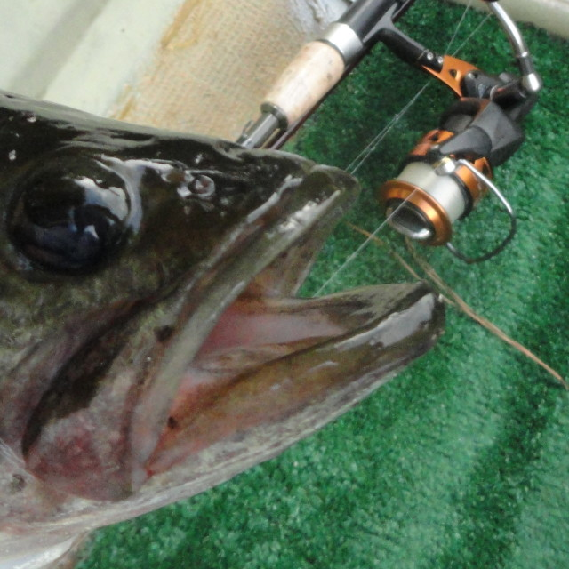 Iowa bass fishing