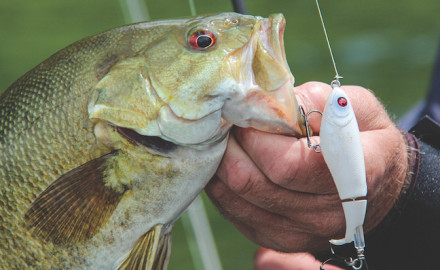 Lake Erie fishing in Ohio waters should provide great action this season for bass, walleyes and