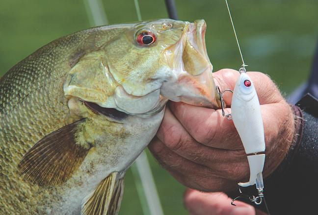 Lake Erie fishing