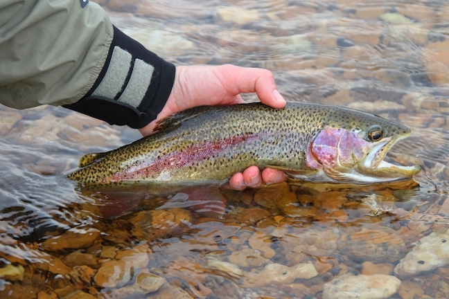 portland trout fishing