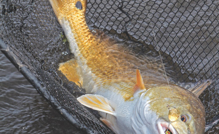 Summertime along the Mississippi/Louisiana means Gulf Coast saltwater fishing, particularly