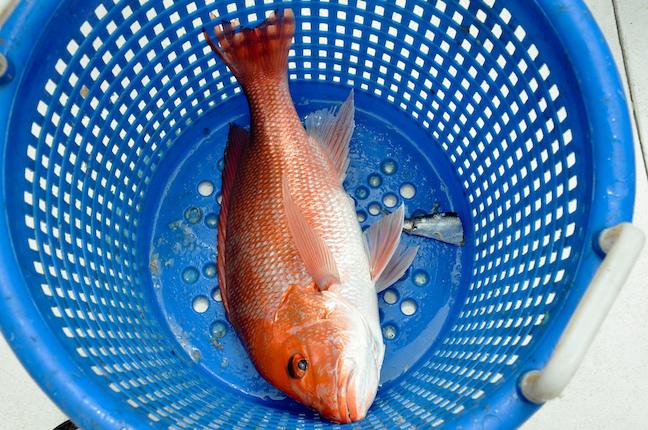 gulf coast saltwater fishing
