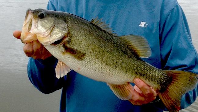 missouri bass fishing
