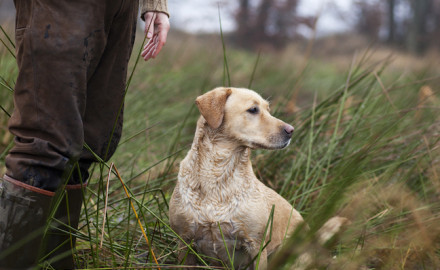 Learning to trust your bird dog takes time and experience for both dog and owner. But when it all