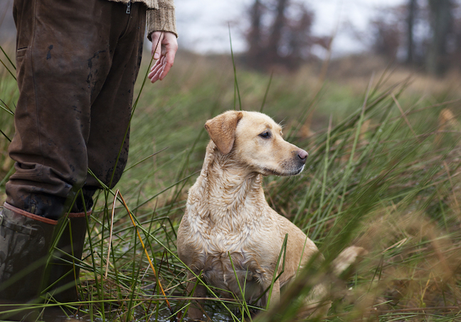 Your Bird Dog: Learn to Build Trust