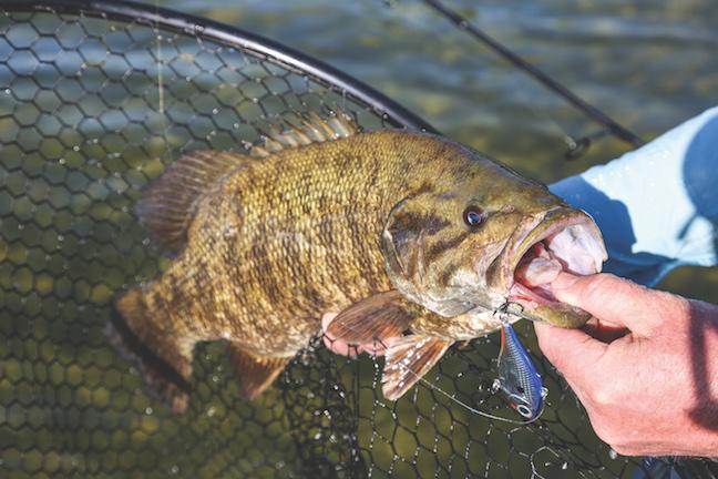 early bass fishing in Arkansas