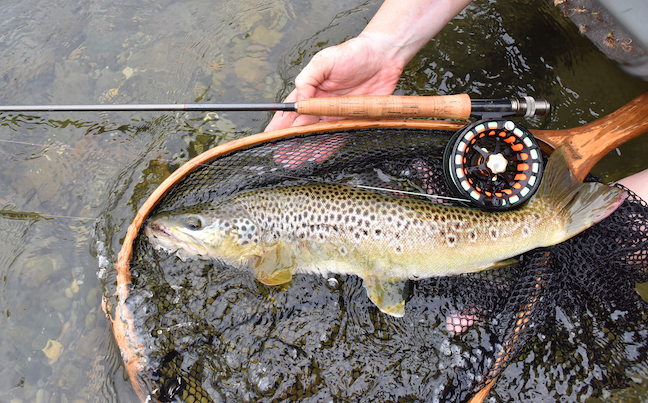 Wild or Stocked, Trout Choices Abound on GA's Chattooga Rive