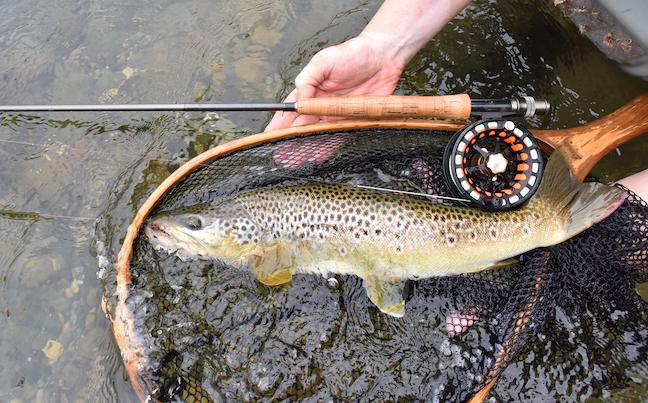 california trout fishing
