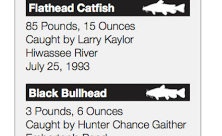 Summer and Tennessee catfish are pretty much uttered in the same breath, especially since there are