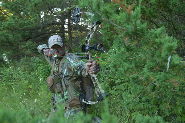 A great bow, with which you can hunt anything in North America, doesn't have to break the budget.