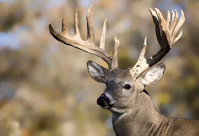 Big Buck Mobile