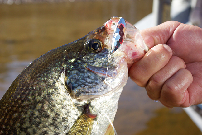 Summer Crappie: 6 Tips to Nabbing More with a Spoon