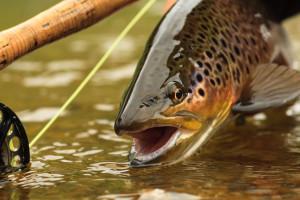 April fishing in Arkansas