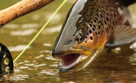 It takes a perfect presentation to the perfect lie to draw a bite while trout fishing. It's